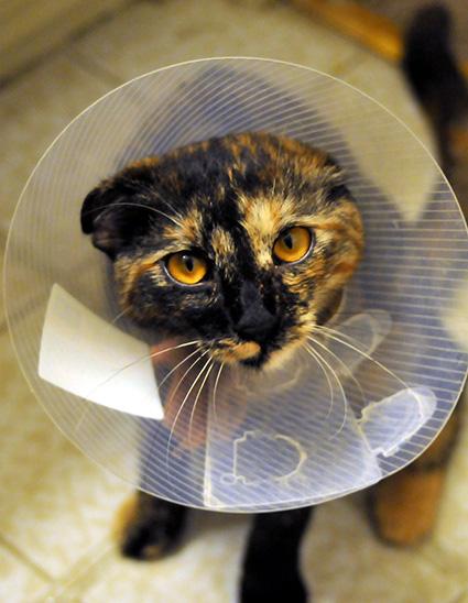 kissa sairastaa_CC0_pieni