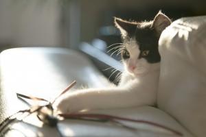 kissan tarvikkeet_CC0